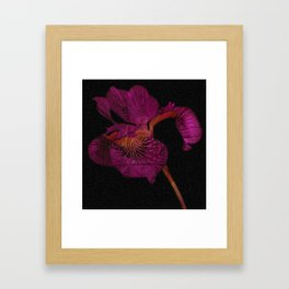 Subtle Psychedelic Print Black and Deep Magenta Iris Framed Art Print