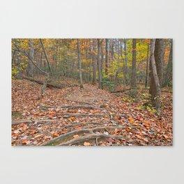 Seneca Fall Forest Trail Canvas Print
