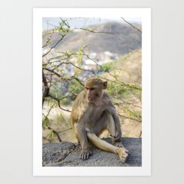 Monkey posing, Sun Temple, Jaipur India  Art Print