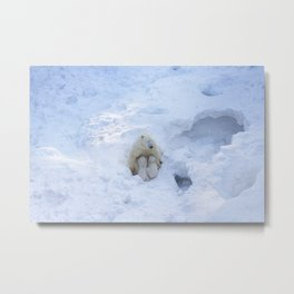 Polar Bear mom feeding twins cubs. Metal Print