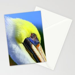 Pelican in Ft. Myers Stationery Cards