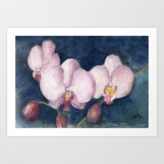 Orchids In the Evening Art Print
