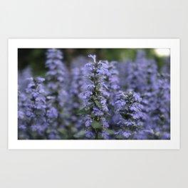 Purple Perennials  Art Print