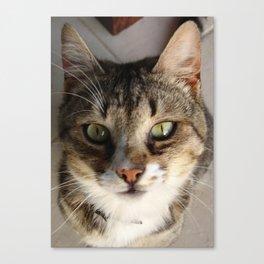Tabby Cat Kitten Giving Eye Contact Canvas Print