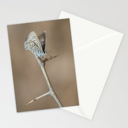 African babul blue. Stationery Cards