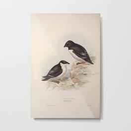 LITTLE AUK (3) Metal Print