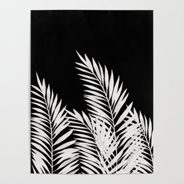Palm Leaves White Poster