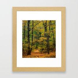 October Forest 3 Framed Art Print