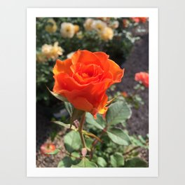 Nameless Rose Art Print