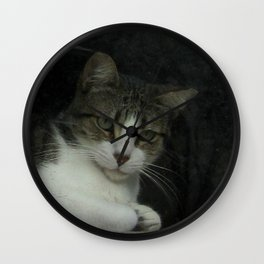 through the looking glass - cat meditating at the window Wall Clock