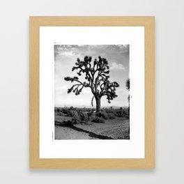 A Joshua tree (Yucca Mohaviensis) in the Mojave Desert near Lancaster, 1904 Framed Art Print