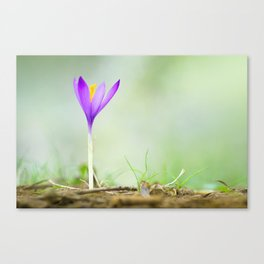 Flower of autumn Canvas Print