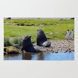 Fur Seals Rug