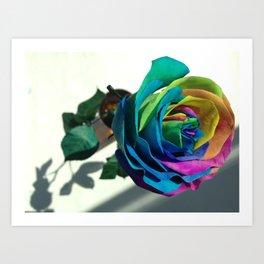 Beautiful rose flower Art Print