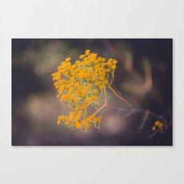 Winter Blooms Canvas Print