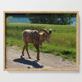 Bighorn Sheep - Banff National Park Serving Tray