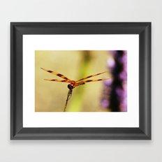 Dragonfly 02 Framed Art Print