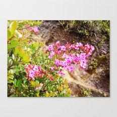Volcanic Petals Canvas Print