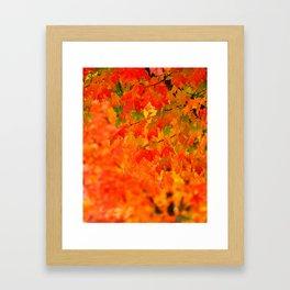 VIVID FALL LEAVES Framed Art Print
