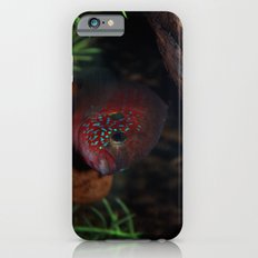 Jewel Cichlid- Red fish Slim Case iPhone 6s