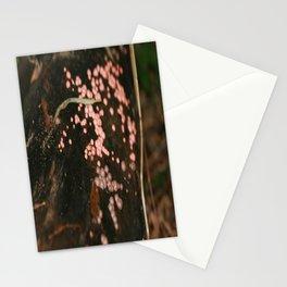 Lycogala epidendrum Stationery Cards