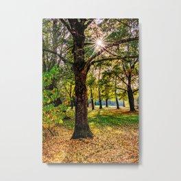 Concept nature : Manuf modus ad lacum Metal Print