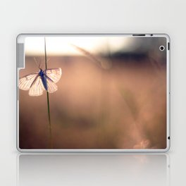 Butterfly on a blade of grass during the sunset Laptop & iPad Skin
