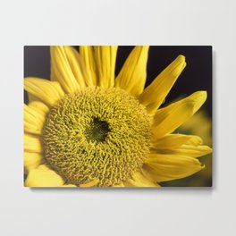 Yellow Disk Sunflower Macro 1 Metal Print