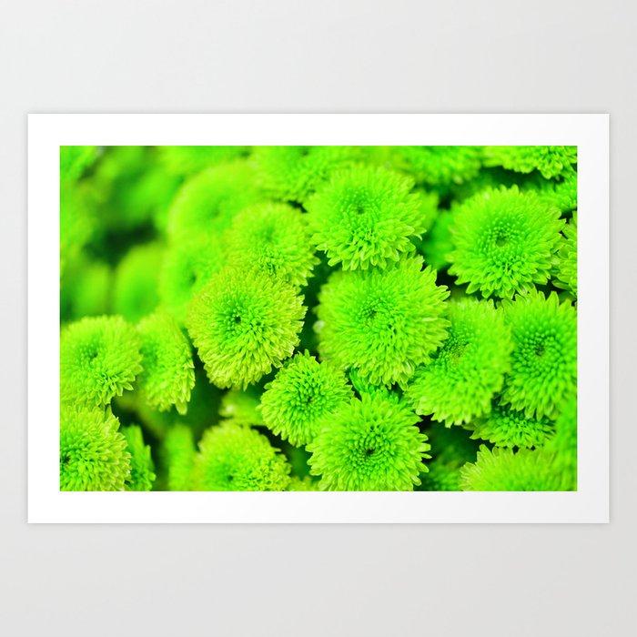 Tiny Green Chrysanthemums By The Road Art Print