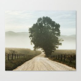 Tree of Life in Cades Cove, TN by Alli Gunter Photography  Canvas Print