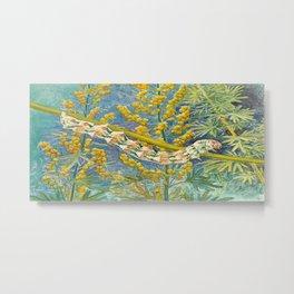 Cucullia Absinthii Caterpillar Metal Print