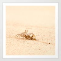 crab Art Prints featuring crab by Photoplace