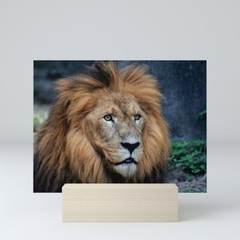 Majestic Lion Mini Art Print