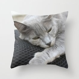 Shades Of Grey Cat Photo Portrait Throw Pillow
