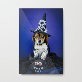 Tiny Tricolor Beagle Puppy Wearing a Fashion Witch Hat Poses in a Halloween Spider Basket Metal Print