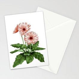 Gerbera Daisy Stationery Cards