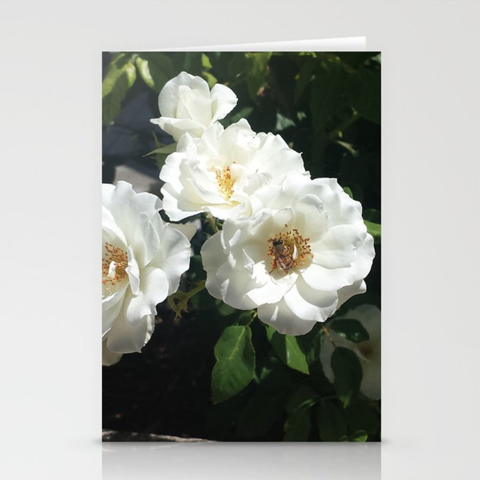 Bee And White Roses Stationery Cards