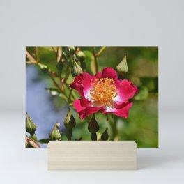 Anemone Florets Blossom Mini Art Print