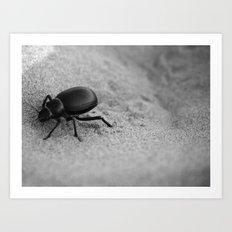 Desert Beetle Art Print
