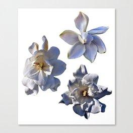3 White Gardenias [Cecilia Lee] Canvas Print
