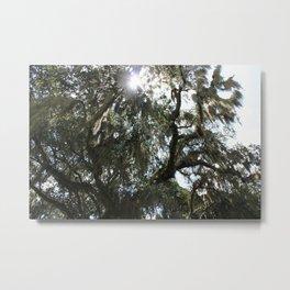 Sunlight Through The Oak 3 Metal Print