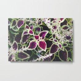 Green and Purple Leaves Metal Print