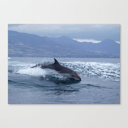 Wild and free bottlenose dolphin Canvas Print