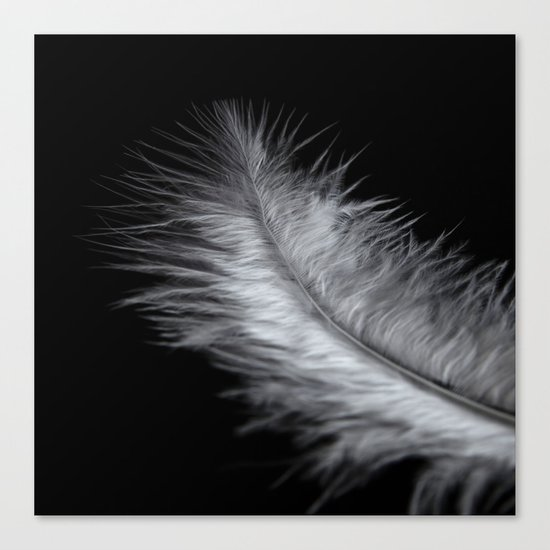 feather in white Canvas Print