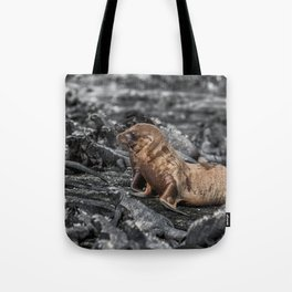 Baby sea lions surrounded by marine iguanas Galapagos Tote Bag