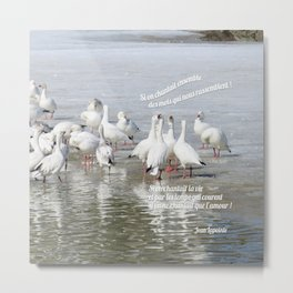 Les Oies Blanches : Si On Chantait - The White Geese : If We Sing Metal Print