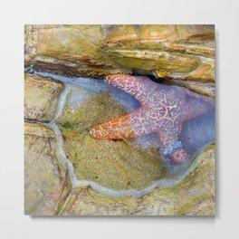 Tidepool Starfish Metal Print