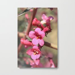 Blushed Bloom Metal Print