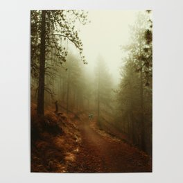 Autumn in Ponderosa Pines Forest Poster