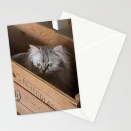 Chinchilla perser. Stationery Cards